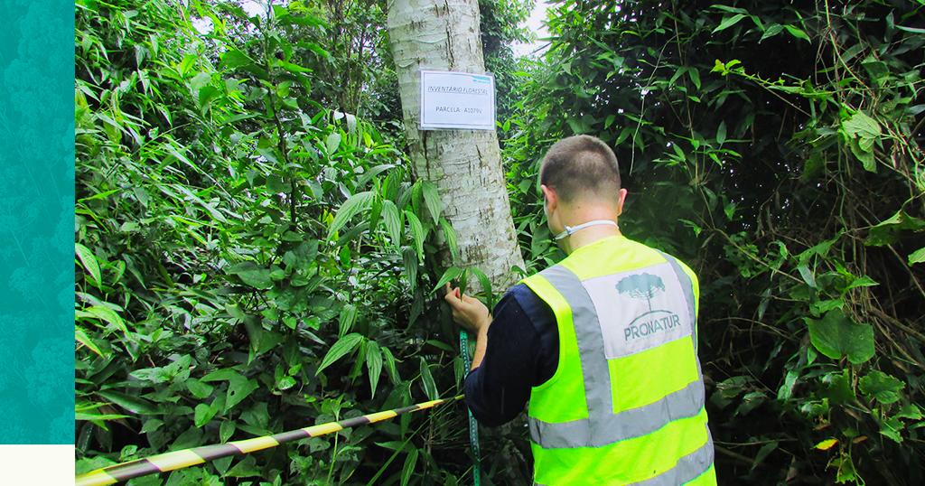 Inventário Florestal: em quais projetos deve ser solicitado